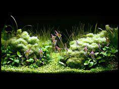aquascape design australia aquarium aquascaping and photo editor online on pinterest