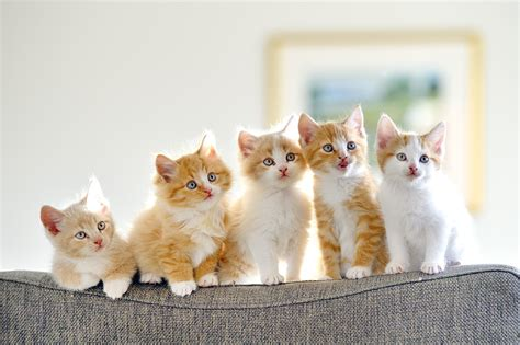 i love cats cute cat kitten pictures cute cat 500px blog 187 the passionate photographer community
