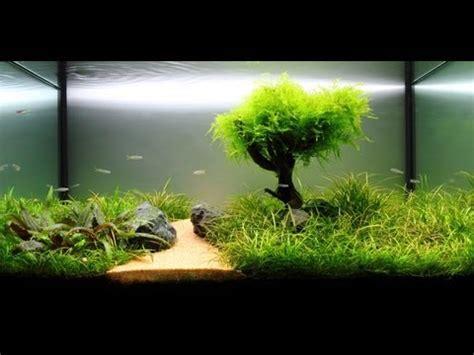 desain aquarium kura kura jenis ikan ikan hias air tawar untuk aquarium menarik