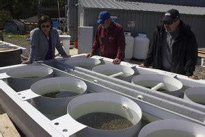jamestown s'klallam tribe develops shellfish hatchery