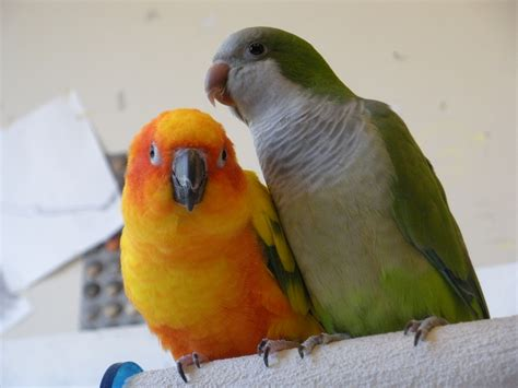 parrots spectrum