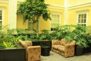 indoor plants talking about turning your home green interior office plants