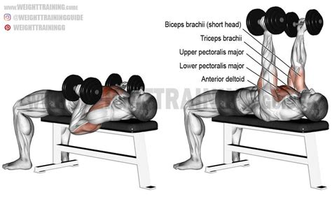 dumbbell bench press exercise 25 best ideas about exercise chart on pinterest weight lifting chart body build