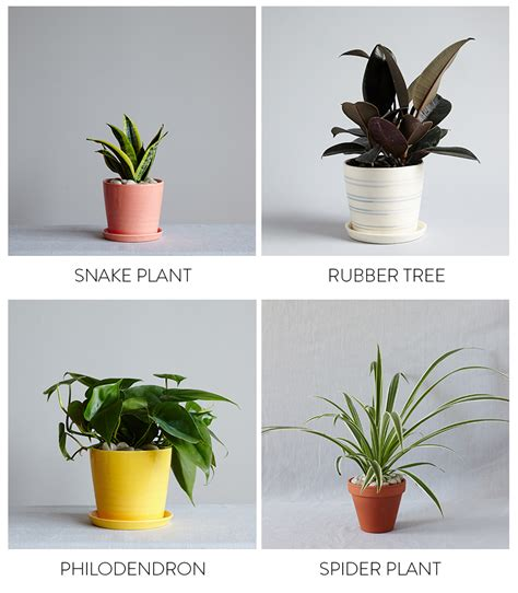 the best plants for bedrooms and bathrooms by the sill parachute blog parachute blog