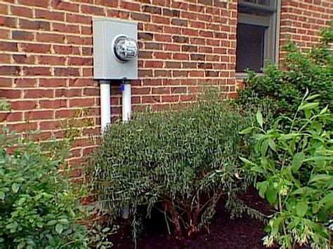 17 low maintenance plants and dwarf shrubs diy garden 17 low maintenance plants and dwarf shrubs diy