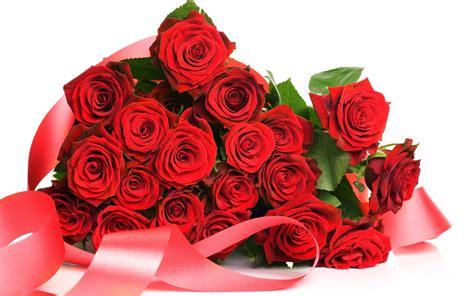 wallpaper flower red rose red rose hd flowers wallpapers flowers