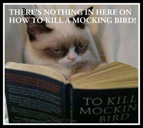 To Kill A Mockingbird Meme - there s nothing in here on how to kill a mockingbird