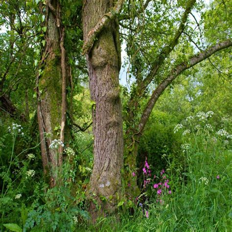 woodland trees trees and woodland 2 photography by martin eager