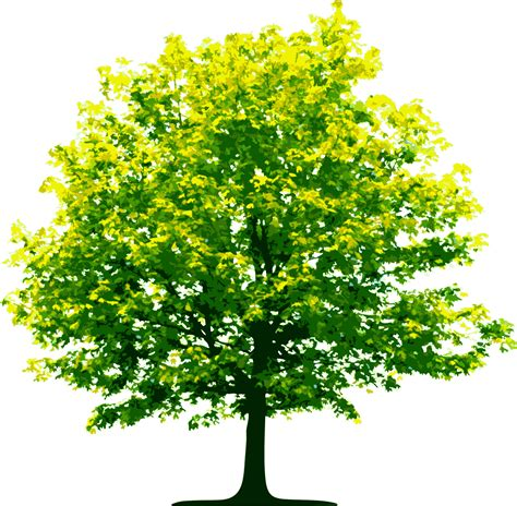 Light Green Tree Transparent Png Stickpng Green Tree Lights