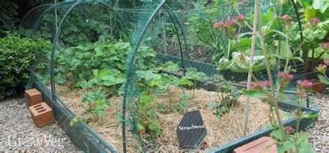 Vegetable Garden Design Choosing The Right Layout For Gardening Netting For Vegetables