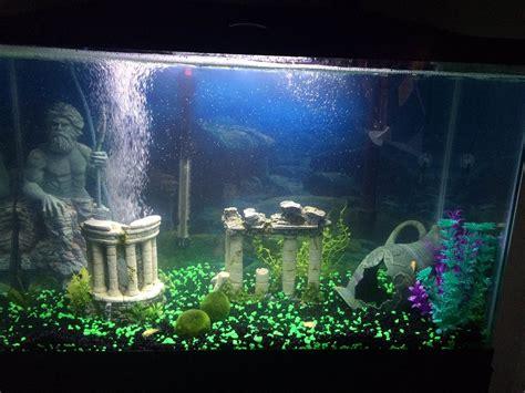 led light for 29 gallon aquarium my 29 gallon community tank aquarium advice aquarium