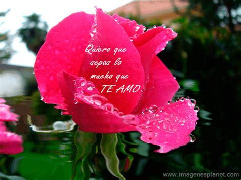 imagenes rosas gif rosas de amor con frases romanticas im 225 genes de amor con
