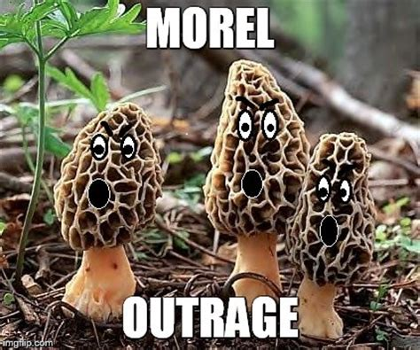 Mushroom Meme - funniest comics and meme s page 14 d3 go forums