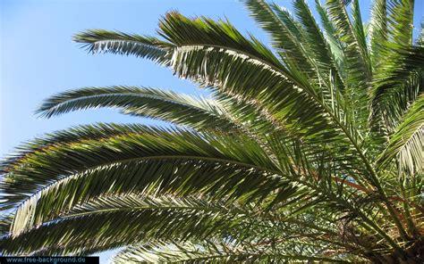 Home Flower sch 246 nes palmen pc hintergrundbild f 252 r desktop