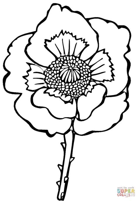 Flower Poppy Coloring Online Poppy Colouring Pages