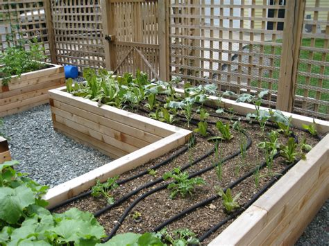 Raised Vegetable Gardening Wonderful Raised Vegetable Garden Design Decorating Ideas