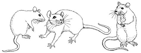 rat drawings in pencil of rat fantasies and scenes from