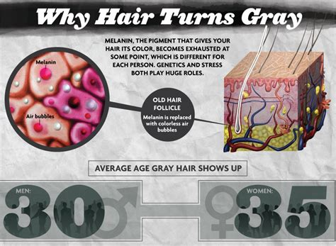 why our hair turn white siowfa15 science in our world why hair turns gray know it all