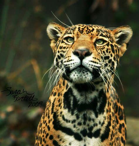 Jungle Animals Real Life   www.pixshark.com   Images