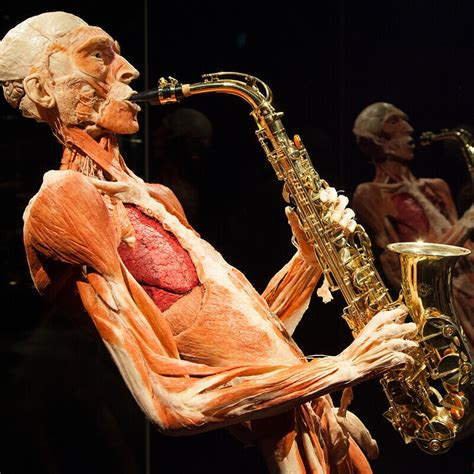 visit body worlds amsterdam tours amp tickets