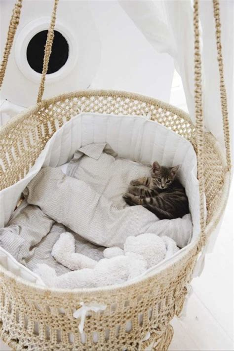 hanging cat bed hanging cat bed design