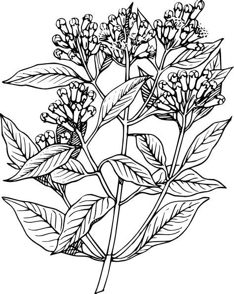 Biji Bunga Lotus Easy Plant plant clip at clker vector clip