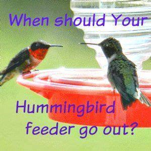 die besten 25 kolibri f 252 tterung futter ideen auf