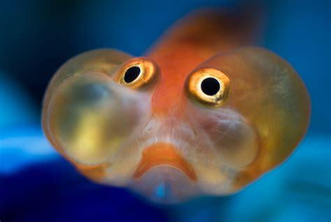 fish eye orange fish the eye si gh t