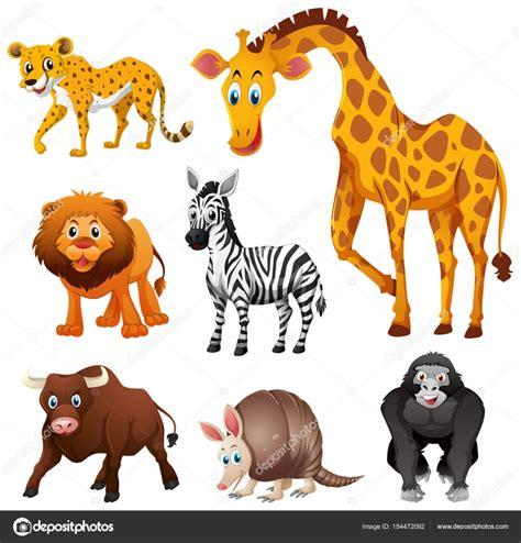 imagenes de animales la selva diferentes tipos de animales de la selva archivo