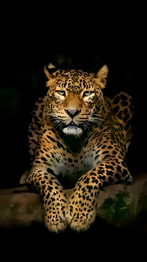 wallpaper 4k hd for mobile leopard iphone 4k ultra hd wallpapers hd wallpapers
