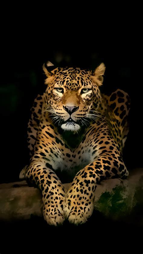 Leopard iPhone 4k ultra HD Wallpapers   HD Wallpapers