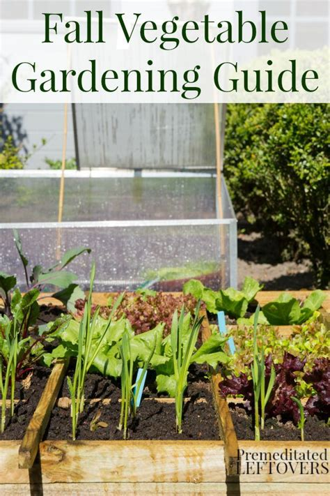 Winter Vegetable Garden List 1000 Images About How Does Her Garden Grow On Pinterest
