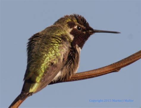 seattle greenlaker birding around green lake