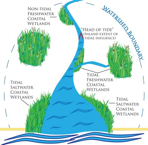 Which Feature Is Characteristic Of A Bottomland Hardwood Forest - coastal wetlands wetlands protection and restoration