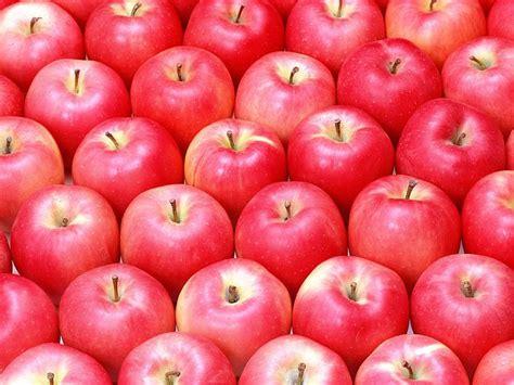 wallpaper apple fruit red apple background 35 wallcoo net
