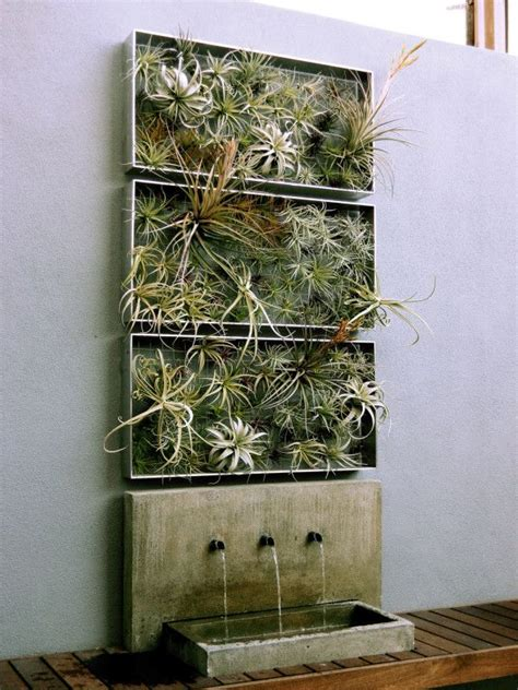 home decor ideas plants air plant airplantman living