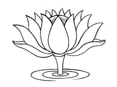 Few Lines About Lotus That Inspires Myth Flowers Plants N Blooms