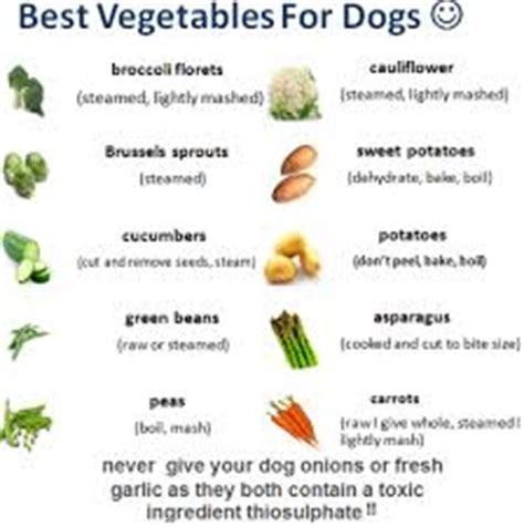 are oranges ok for dogs how to make food a complete guide