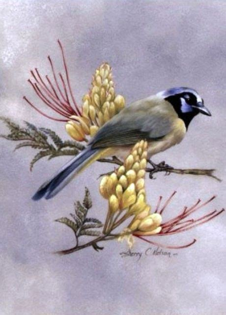 Painting Songbirds With Sherry C Nelson sherry nelson decorative painter beautiful bird