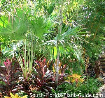 florida landscaping plants south florida landscaping ideas landscape in a box
