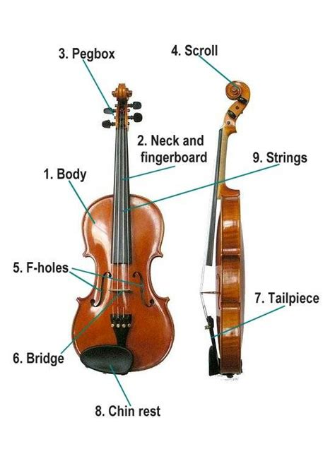 labelled diagram of a violin for parts of the violin