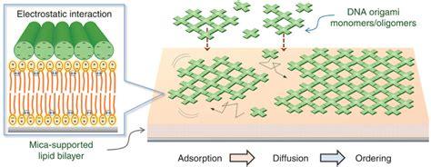 lipid dna origami may lead to advanced future nanomachines