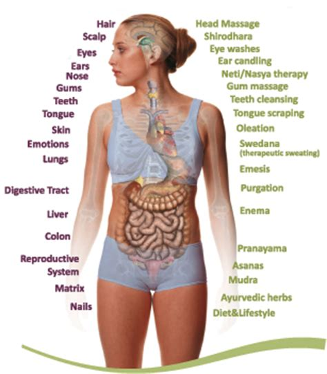 Ayurvedic Cure Detox by What Is Panchkarma Panchkarma In India