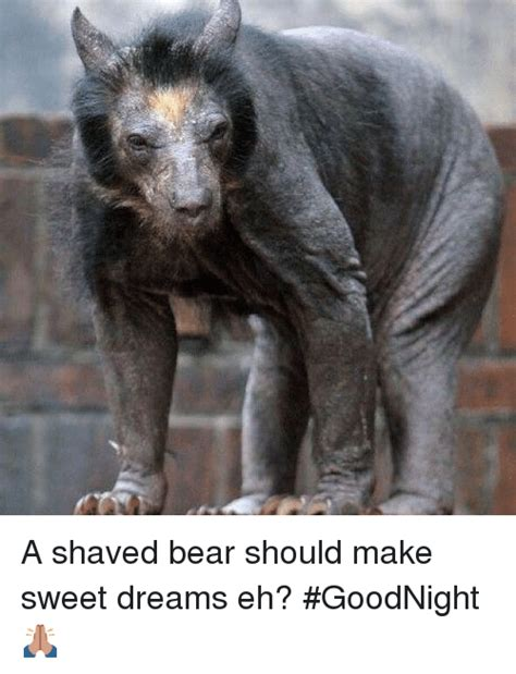 a shaved bear should make sweet dreams eh goodnight