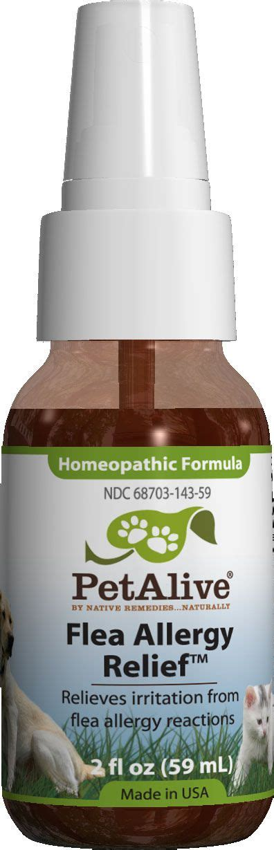 flea allergy home remedy flea allergy relief homeopathic remedy temporarily