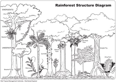 rainforest sections rain forest coloring sheet yahoo image search results