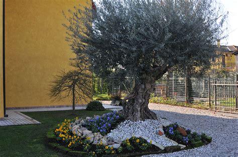 giardino con ulivo gallery vivai gardens vivai gardens