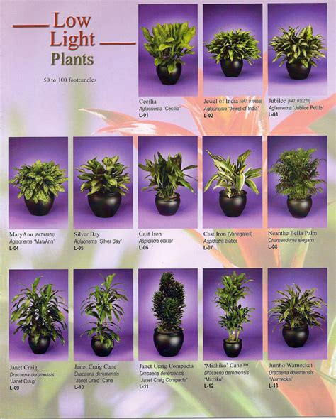 inside urban green low light low maintenance dracaena bowl low sunlight plants low sunlight plants shades of green home