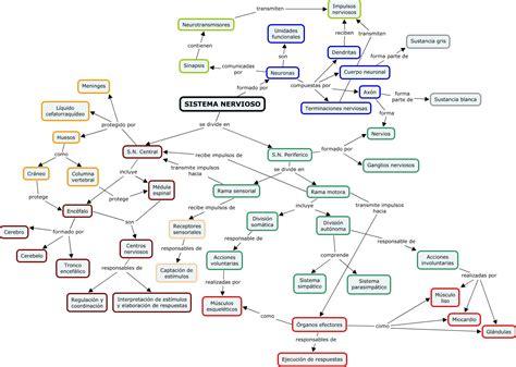 mapa conceptual del sistema nervioso mapa conceptual funciones del sistema nervioso car
