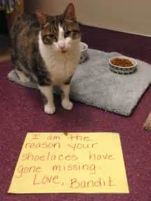 Dachshund Bed Humane Society Silicon Valley Blog Cat Shaming Hssv Edition